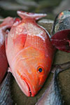 fish_in_seychelles_market.jpg